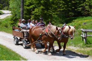 Pferdekutschenfahrt im Naturpark